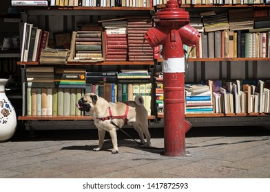 Budapest, Hungary - April 27, 2014: Dog guarding a library with hydrant