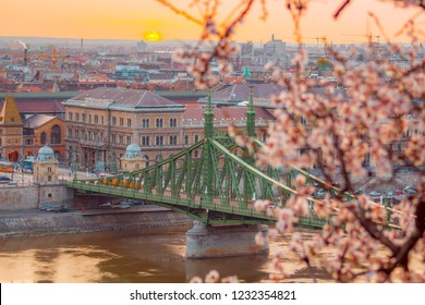 Budapest, Hungary - Beautiful Liberty Bridge at sunrise with cherry blossom. Spring has arrived to Budapest.