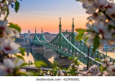 Budapest, Hungary - Beautiful Liberty Bridge at sunrise with cherry blossom around. Spring has arrived in Budapest.