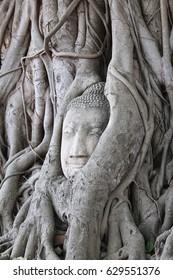 Buddha at Ayutthaya Temple