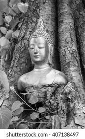 Buddha in the  Bodhi Tree head White-black