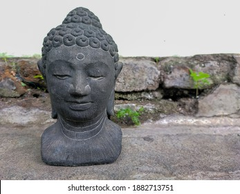 a buddha gautama's head statue with a growing plants from the aged wall as a background