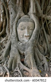 Buddha Head at Ayuttaya