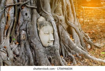 The Buddha head stuck in the Bodhi root at Wat Mahathat. Phra Nakhon Si Ayutthaya Historical Park, Thailand