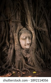 Buddha head sulpture in a tree.
