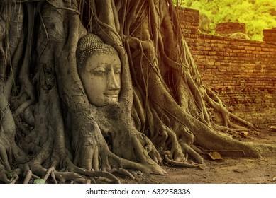 Buddha Head Tree Wat Maha That (Ayutthaya). buddha statue trapped in Bodhi Tree roots. Ayutthaya historical park.