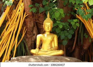 Buddha image sitting under Bodhi tree