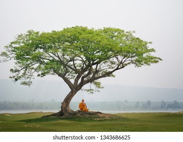 Buddha monk practice meditation under the tree