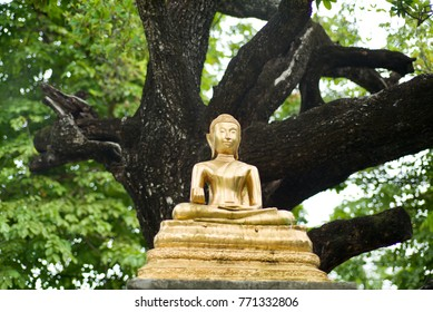 The Buddha placed in the middle of the garden.