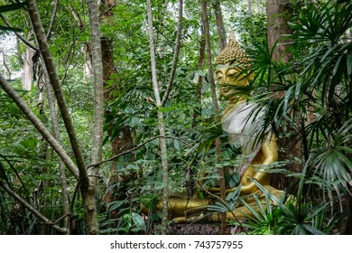 Buddha statue in forest, deep meditation in jungle, peace and nature