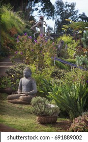 A buddha statue in the garden at the Alii Kula Lavender Farm in upcountry Maui, Hawaii