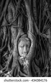 Buddha statue in the tree