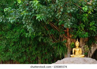 Buddha statue under the bodhi tree