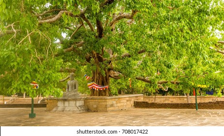 Buddha statue under the bodhi tree at the Jetavanarama Dagoba, the biggest stupa in Anuradhapura, Sri Lanka.