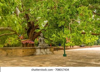 Buddha statue under the bodhi tree at the Jetavanarama Dagoba, the biggest stupa in Anuradhapura, Sri Lanka.