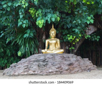 Buddha statue under the tree