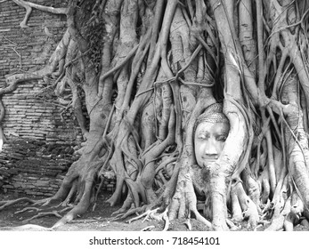 Buddha in a tree Ayutthaya Thailand