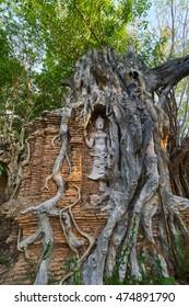 Buddha in Tree Root.