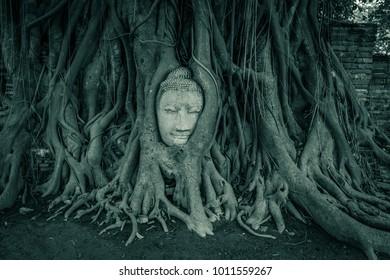 Buddha Tree, Thailand
