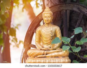 Buddha under banyan tree in public temple Thailand