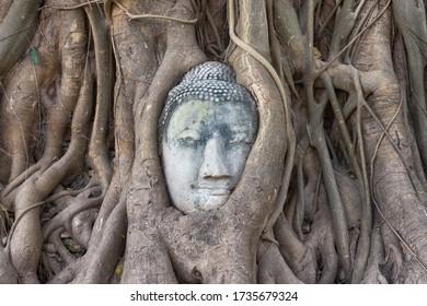 Buddha's head in banyan tree roots, Ayutthaya, Thailand