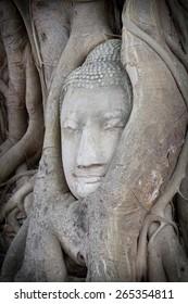 Buddha's head in bodhi tree antiques