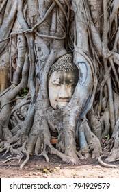 Buddha's head inside tree roots at Wat Mahathat, Ayutthaya, Thailand