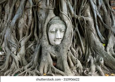Buddha's head in tree roots at Wat Mahathat, Ayuthaya