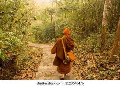 Buddhist monk walks through the forest