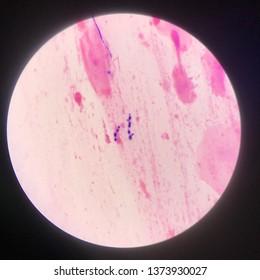 Budding yeast cells background.