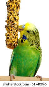 budgerigar with birdseed, isolated on a white background
