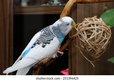budgerigar perched on dry branch
