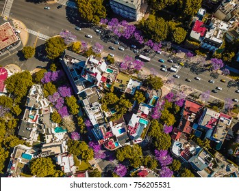 Buenos Aires city with its blooming jacaranda trees