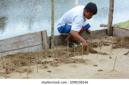 BUENOS AIRES, NAUTA, PERU - OCT 15, 2015: Worker at a Turtle hatchery in the Peruvian Rainforest. The turtles will be released into a protected area in a repopulation effort.