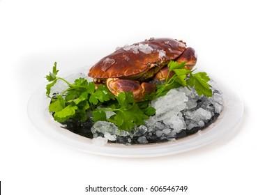 Buey de mar crudo en un plato con hielo y perejil