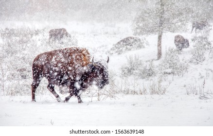 Buffalo Farm Traverse City Michigan