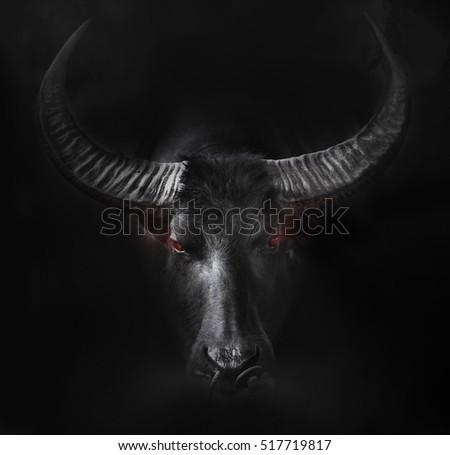 Buffalo head close up