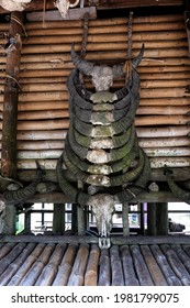 Buffalo Head Skull, Prai Ijing, West East Sumba, Indonesia
