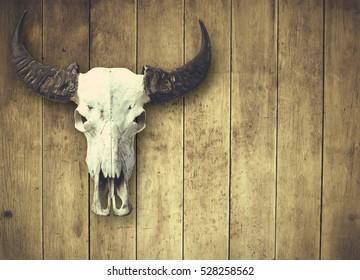 Buffalo horn on old wooden wall. Buffalo dead on wooden wall.