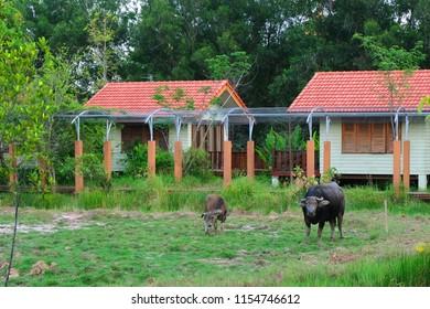 Buffalo in the meadow