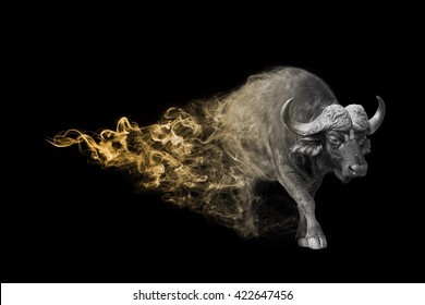 The buffalo is one of the big five animals you must see in africa, animal kingdom collection, African wildlife