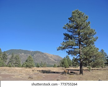 """Buffalo Park in Flagstaff, Arizona offers scenic vistas of surrounding mountain peaks and wide paths for hiking, away from the scurry of downtown.  One has a feeling of being """"away from it all."""""""