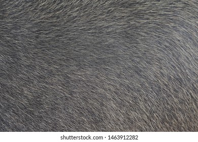 buffalo skin look like background texture