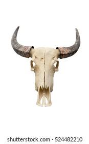 buffalo skull isolated on white