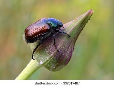 Bug on bud