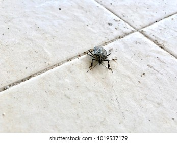 Bug on the floor