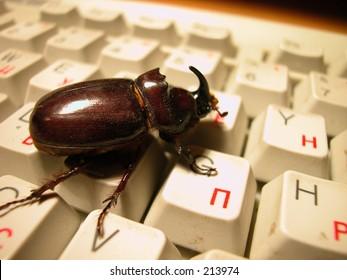 bug on the keyboard