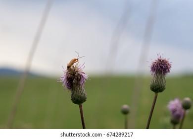 Bug on a plant. Slovakia