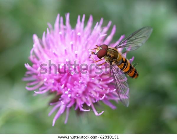 Bug on purple flower