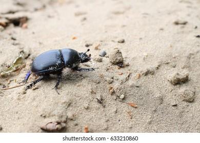 Bug on the sand